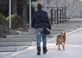 Una prova pilot permetrà l'accés amb gossos a dependències municipals