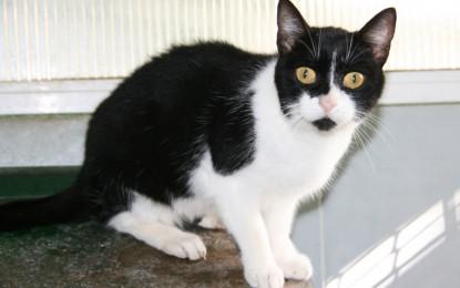 Campanya per promoure l'adopció de gats